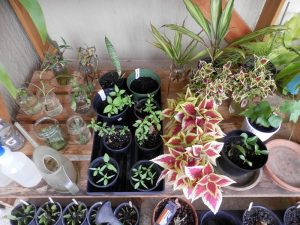 Cuttings and Seedlings