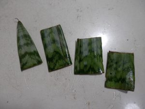 Snake plant leaf cuttings