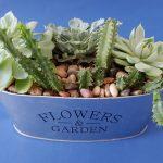 Flowers & Garden succulent planter