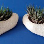 Haworthia in ceramic slipper