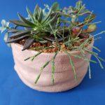 Tan ceramic succulent planter